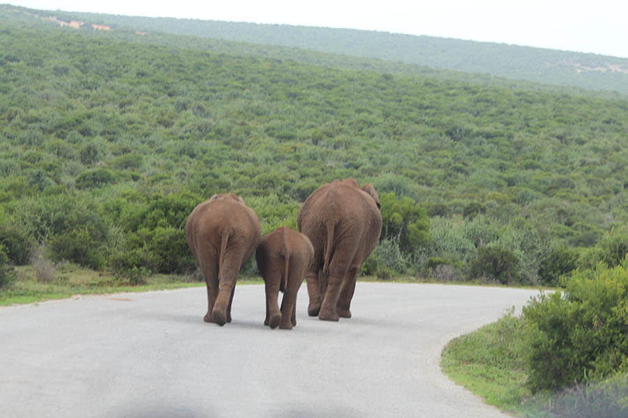 Suedafrika_Afrika 2016 0219