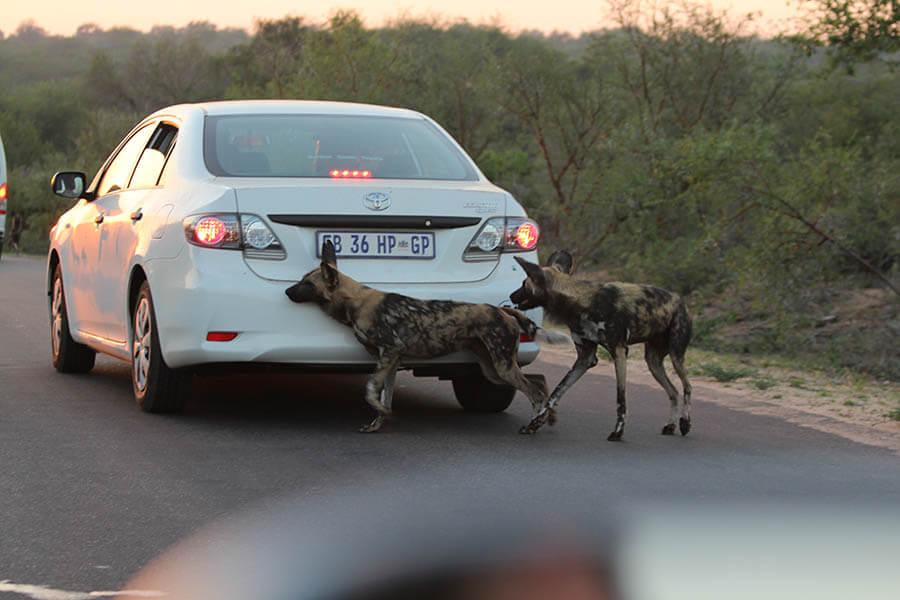 Suedafrika_Afrika 2016 2744